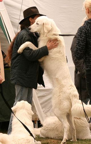 Wanna-hug