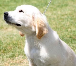 Pretty-puppy-2