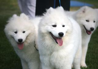 3-puppies-5