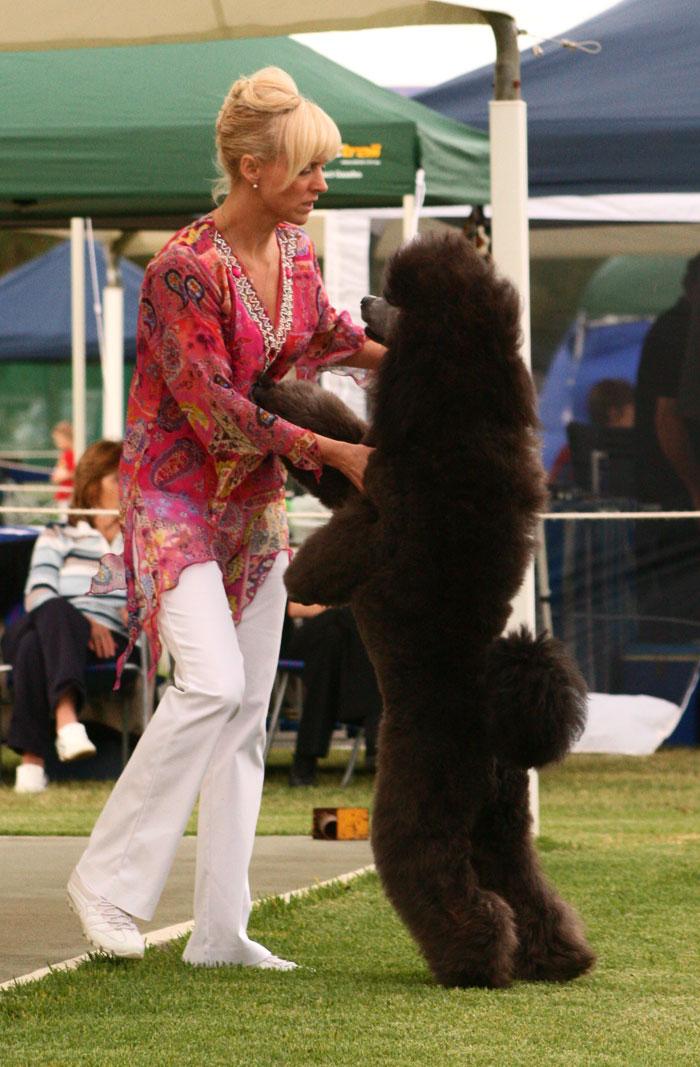 Big-poodle