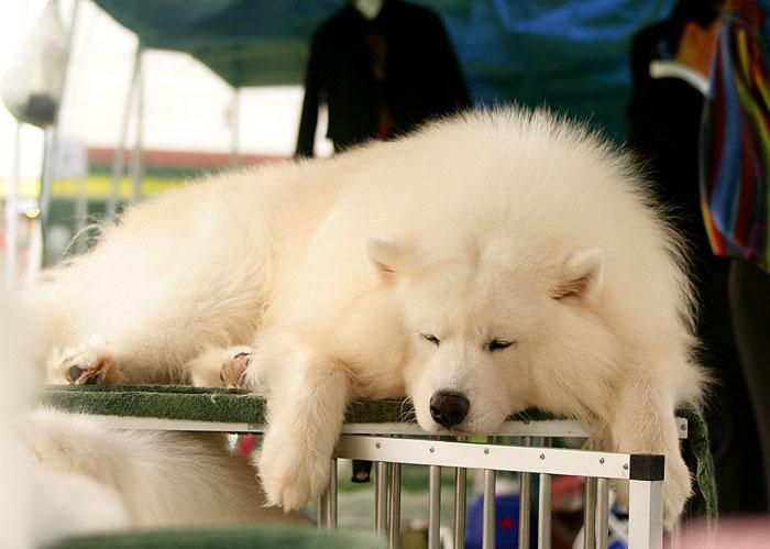 Sleepy-Sam